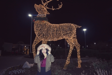 blog deer 2